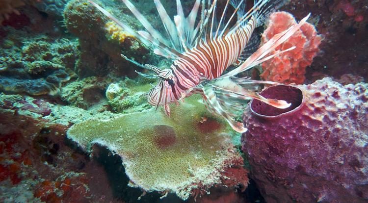 plongee-sous-marine-nosy-be-madagascar