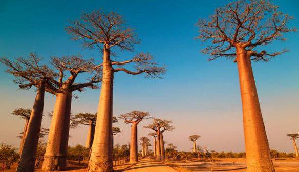 5 destinations de rêve pour découvrir l'Afrique